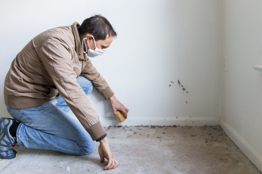 Young man in mask sitting crouching by room wall carpet floor flooring, white painted walls, during remodeling renovation, cleaning, inspection of dirty filty mold, dust, trash